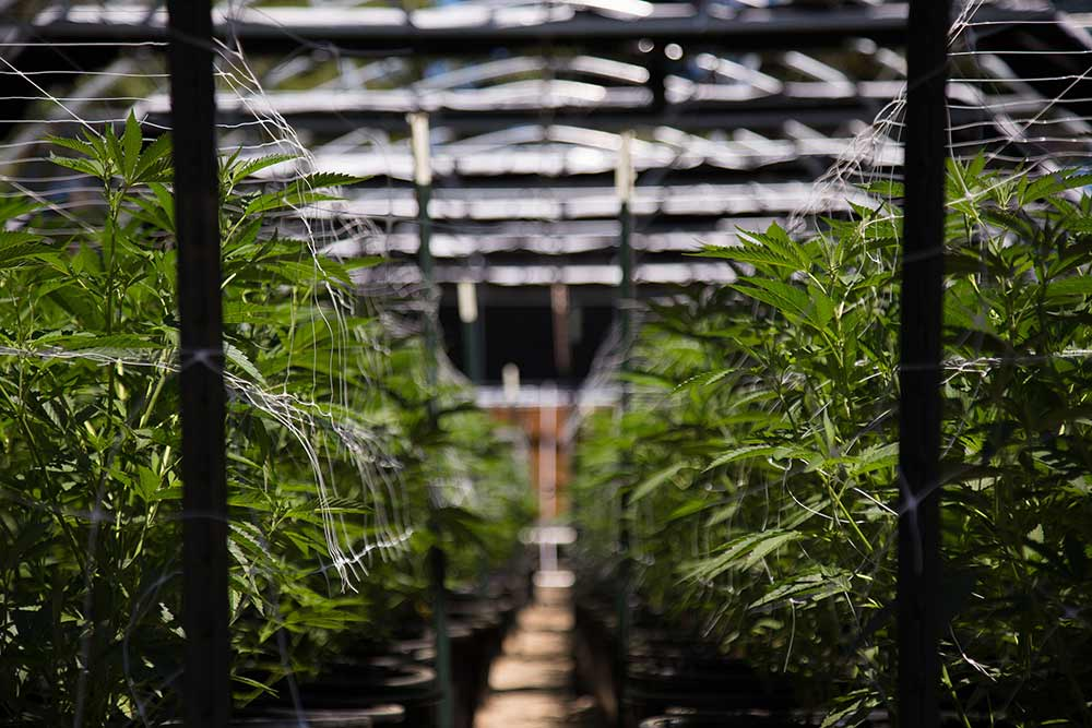Which State Could Be the Next to Legalize Marijuana?